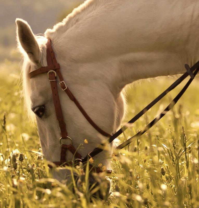 media/image/Sommer_Pferd_Banner2.jpg