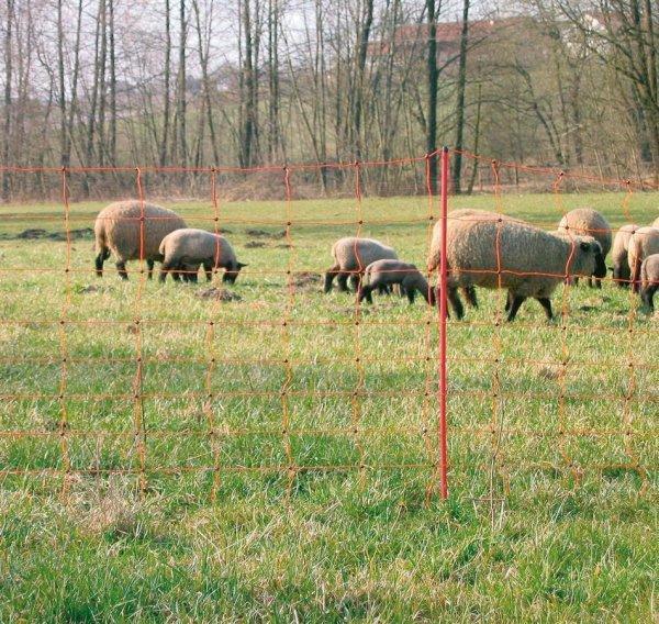 Kerbl Ovi Net, 50 m Doppelspitze, 90 cm