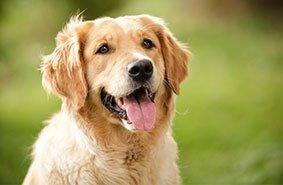 media/image/Hund2.jpg
