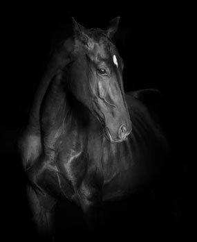media/image/Pferd_4_285x34958aec1c352612.jpg