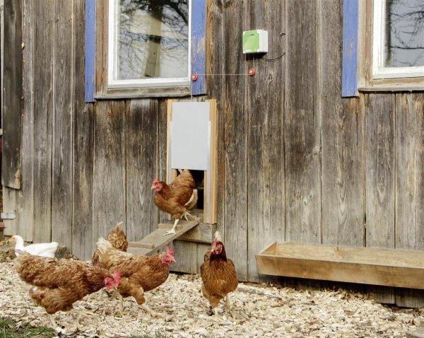 Kerbl Schiebetür für die automatische Hühnertür, 300x 400 mm, Alu