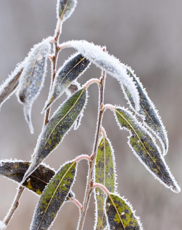 media/image/Winter_HerbstLP.png